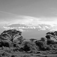 Kiliminjaro - Serengeti Vista.
