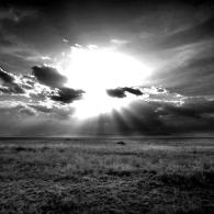 The Serengeti at Dusk