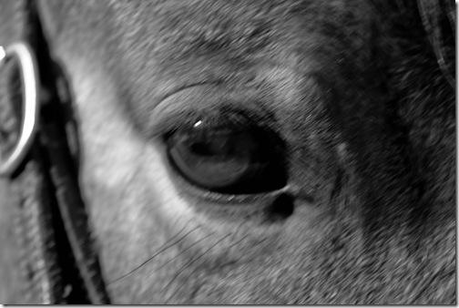 A Soft Eye