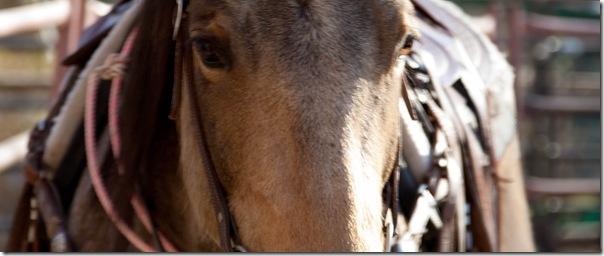 Horses-2009-0321-5