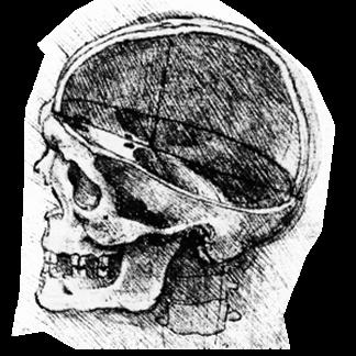 daVinci-Skull
