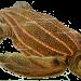 Haeckel-Dermochelys-Coriacea thumbnail