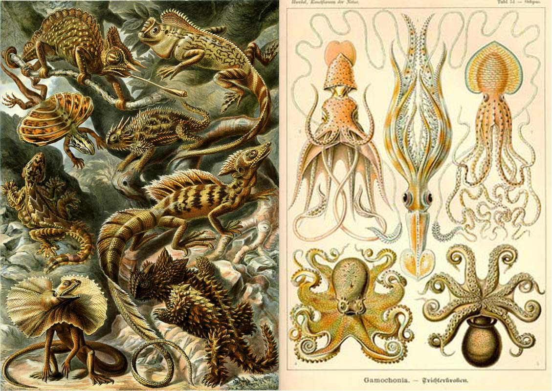 Haeckel-Lacertilia