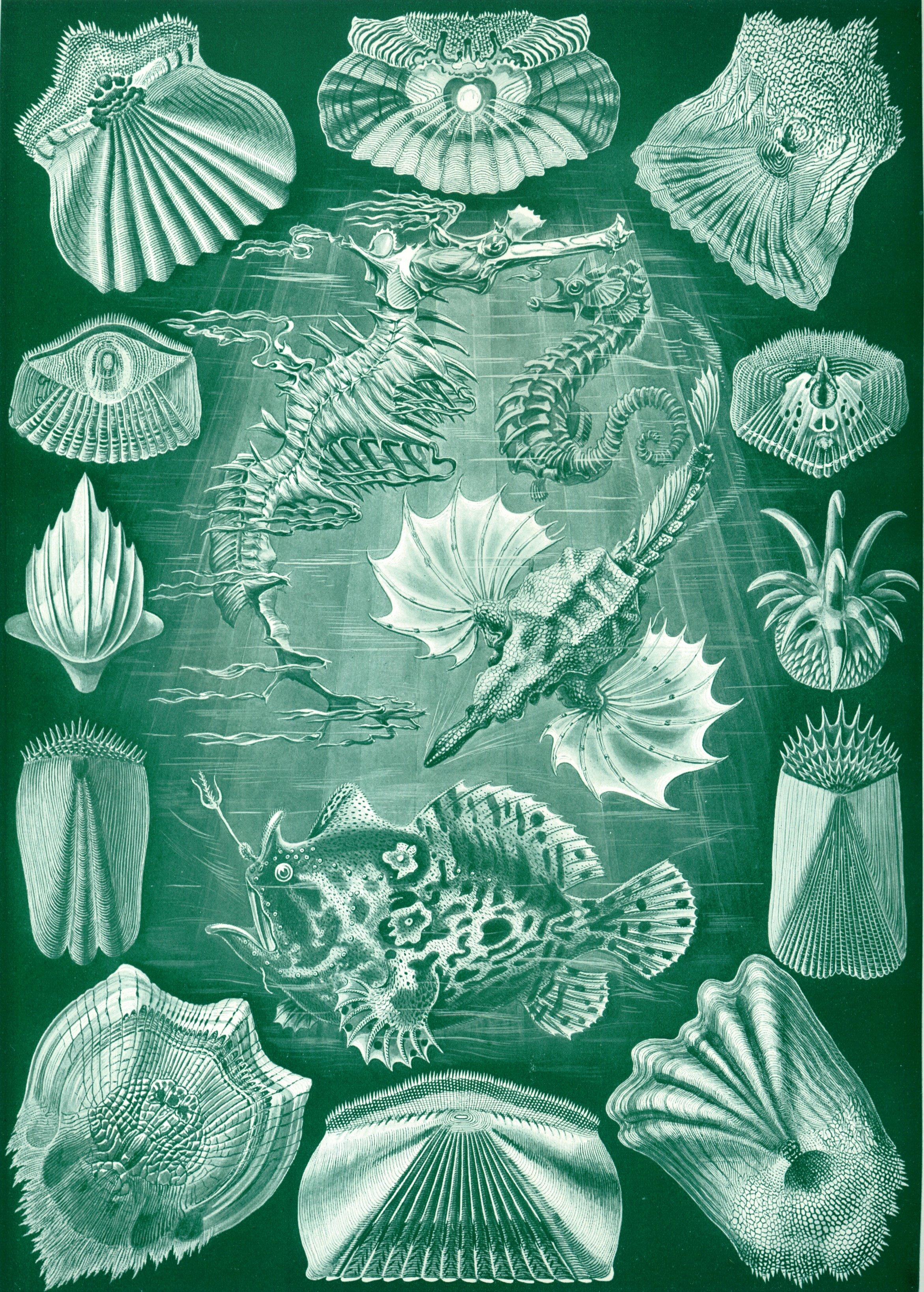 Haeckel-Teleostei