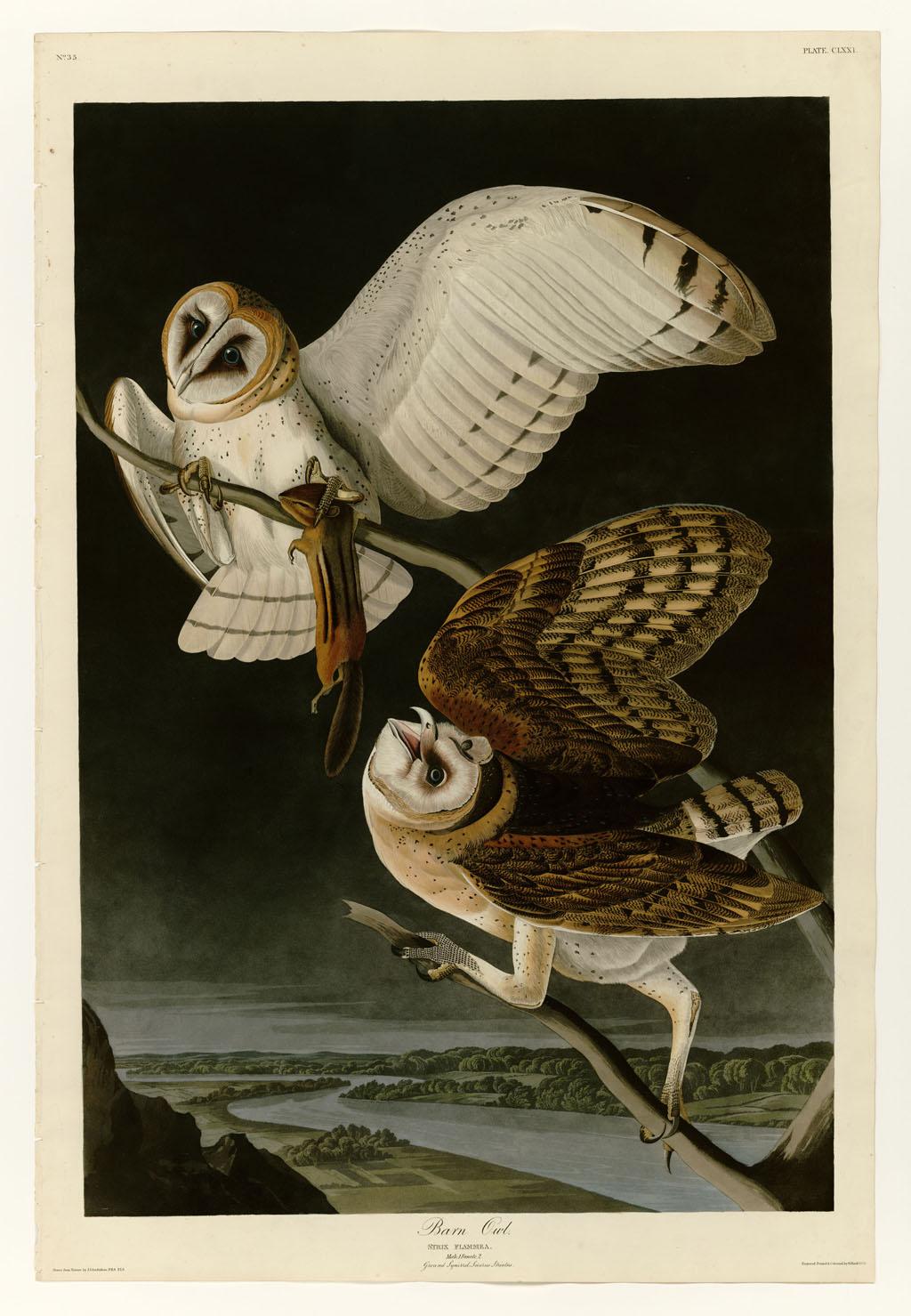 John James Audobon - Barn Owl
