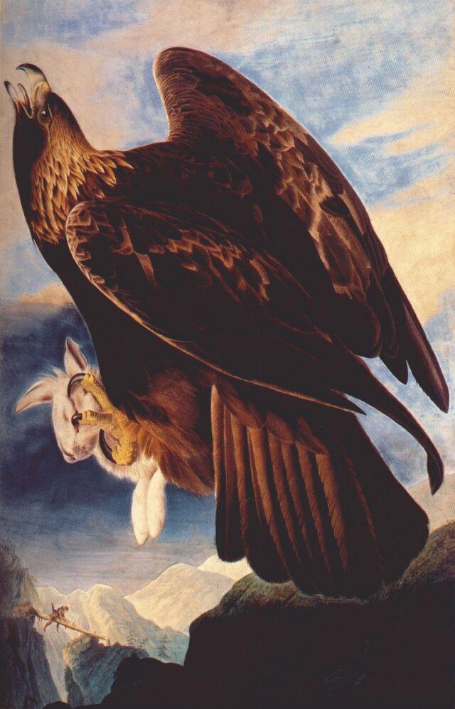 John James Audobon - Golden Eagle